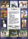 horses for sale. лошади на продажу