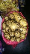 Продам картофель оптом со склада в Москве.